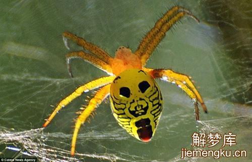 梦见蝎子_梦见蜘蛛蝎子是什么兆头 - 周公解梦大全 - 解梦库