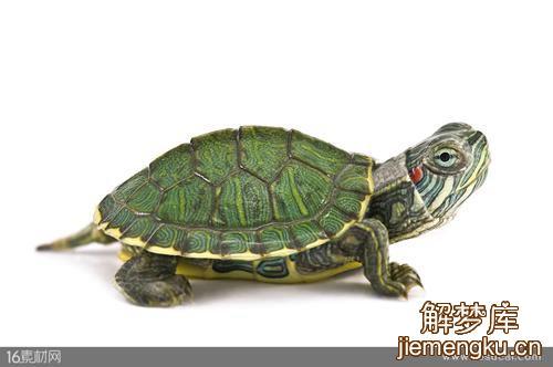梦见绿色的乌龟