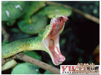 梦见蛇咬自己
