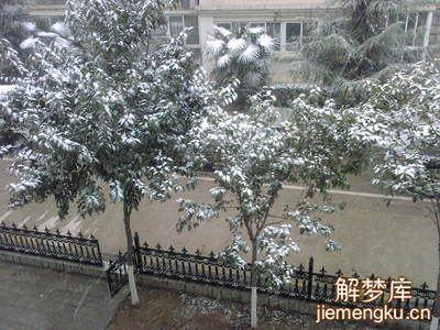 梦见看见雪