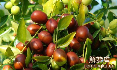 梦到长刺的枣树